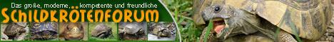 Schildkrötenforum